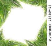 green coconut leaf frame... | Shutterstock . vector #189369419