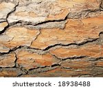 wooden bark great as a background - stock photo