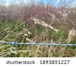 Barbed Wire In Front Of A Field ...