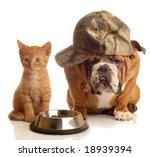 Stock photo english bulldog and orange kitten sitting at food dish 18939394