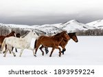 A Mixed Herd Of Wild And...