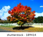 This is an abstract image of a colorful fall tree in New Jersey. - stock photo