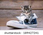 Little Kitten Is Sitting In A...