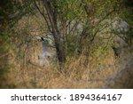 Rhinoceros  White Rhino  Kruger ...