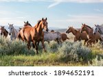 Colorful Herd Of Ranch Horses...