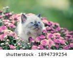 Cute Kitten Sitting In...