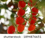 Red Cherry Tomatoes Fruit...