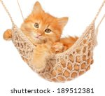 Stock photo cute red haired kitten lay in hammock on a white background 189512381