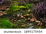 Group Of Tiny Wild Mushrooms...