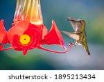 A Small Green Hummingbird...