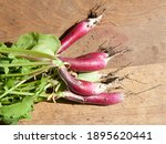 Radishes Fresh From The Soil...