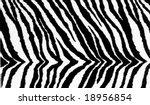 zebra pattern texture | Shutterstock . vector #18956854