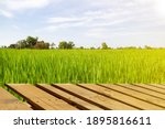 Green Rice Field With Sky...