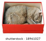 Cat Sleeping In Red Shoes Box...