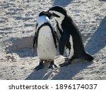 Love Of Penguins On The Lovely...
