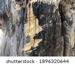 Small photo of Rough old wood tree greyed and scratched