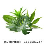 exotic tropical leaves isolated ... | Shutterstock . vector #1896601267