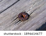 Rusted Phillips Screws Hold The ...