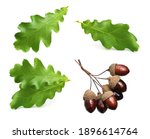 dried acorns with leaf isolated ... | Shutterstock . vector #1896614764