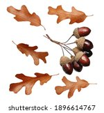 dried acorns with leaf isolated ... | Shutterstock . vector #1896614767