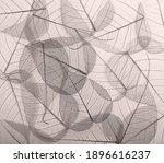 monochrome skeleton leaves... | Shutterstock . vector #1896616237