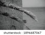 Palm Leaves In Foreground With...