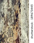 Plane Tree Crust Texture