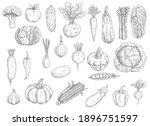 farm vegetables vector sketches.... | Shutterstock .eps vector #1896751597
