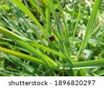 Ladybug Beetle Red In Black Dot ...