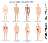 cartoon human body organs... | Shutterstock .eps vector #1896987274