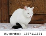 White Cat Fluffy Fur And...