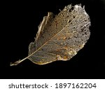 Golden Leaf   Skeleton On Black ...