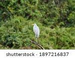 Exotic Birds Of The Pantanal....