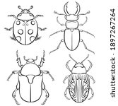 Vector Illustration With Insect ...