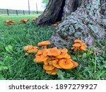 A Cluster Of Orange Jack O...