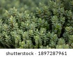 Selective Focus Of Small And...
