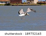 Beautiful seagull soaring over the water with details from the port in the background