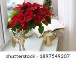 Beautiful Poinsettia  Cup Of...