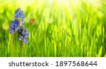 Idyllic Spring Flower Meadow In ...