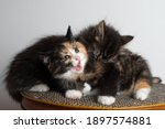 Two Kittens Playing On A Bed....