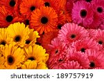 A Bouquet Of Gerberas. Floral...