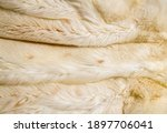 close up background from light...   Shutterstock . vector #1897706041