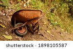 Wheelbarrow  Old  Broken  And...