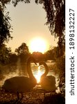 An Silhouette Image Of Swans In ...