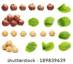 Forest Nuts Hazelnuts Isolated...