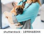 Medicine  Pet Care And People...