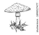 mushroom amanita growing in... | Shutterstock .eps vector #1898527477
