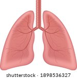 lungs human internal organ... | Shutterstock .eps vector #1898536327