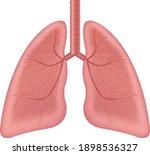 lungs human internal organ... | Shutterstock .eps vector #1898536327