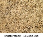 Hay Seamless Background